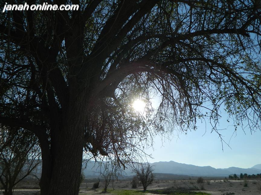 بعد از بارش رحمت الهي،طبيعت جاني تازه گرفت… (صحراي اَوزا)